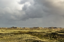 No.201 Hanstholm Vildtreservat