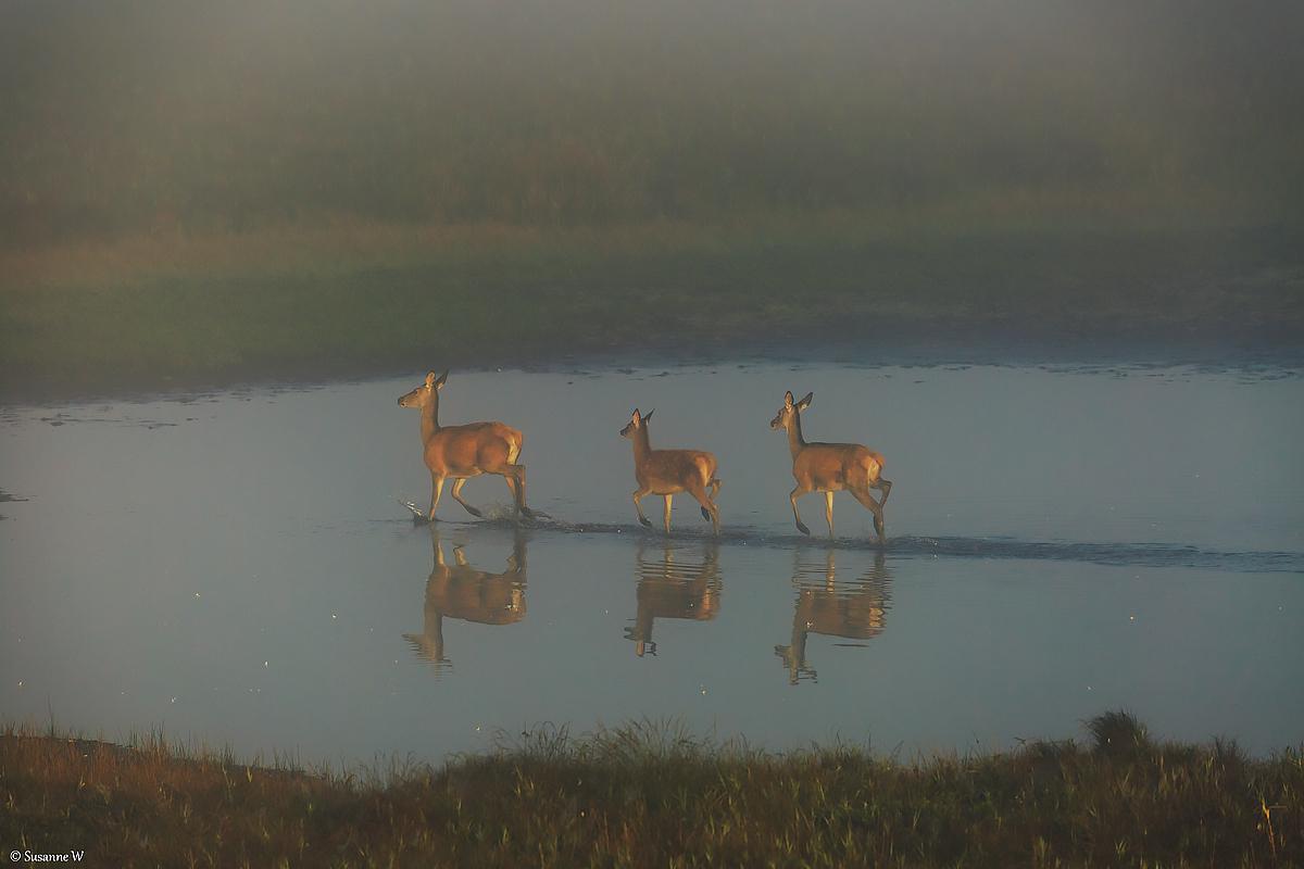 No.40 Spejling i tågen