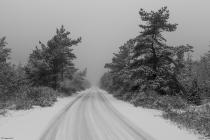 No.116 Sne i Tvorup Klitplantage 1