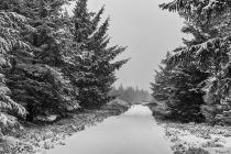 No.119 Sne over Stenbjerg Klitplantage 1
