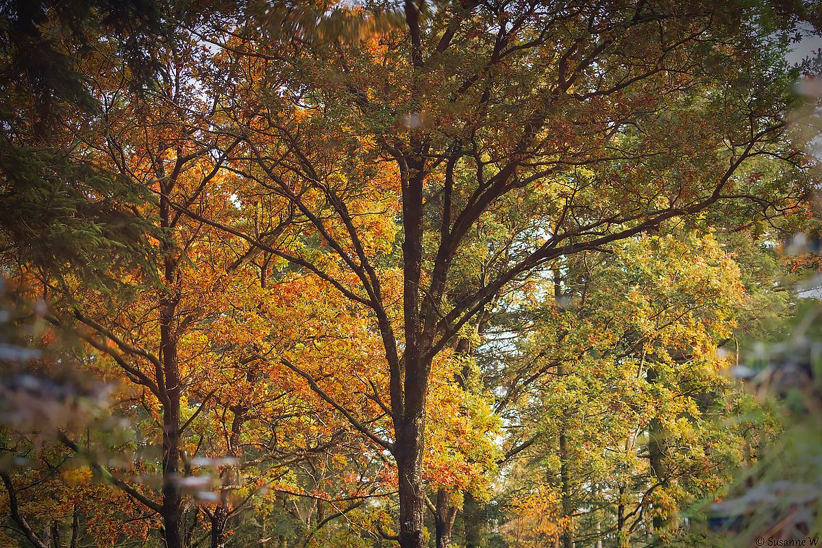 No.112 Efteråret spejler sig