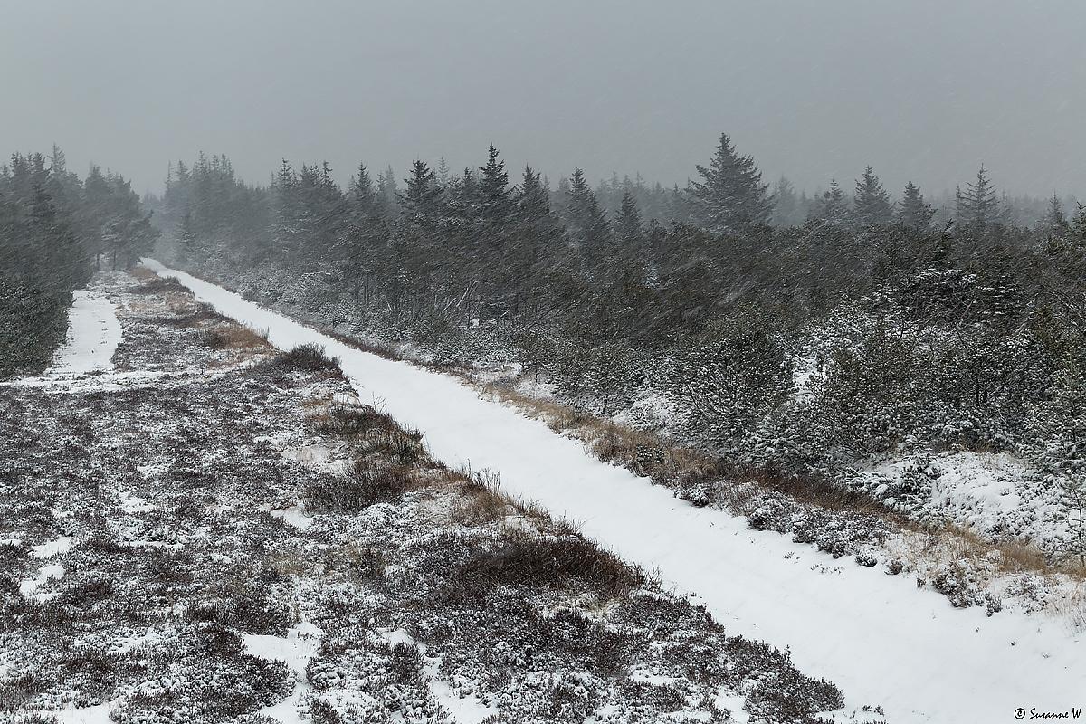 No.120 Sne over Stenbjerg Klitplantage 2