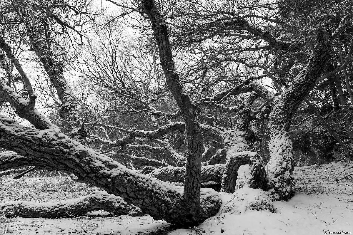 No.27 Thagaard i sne