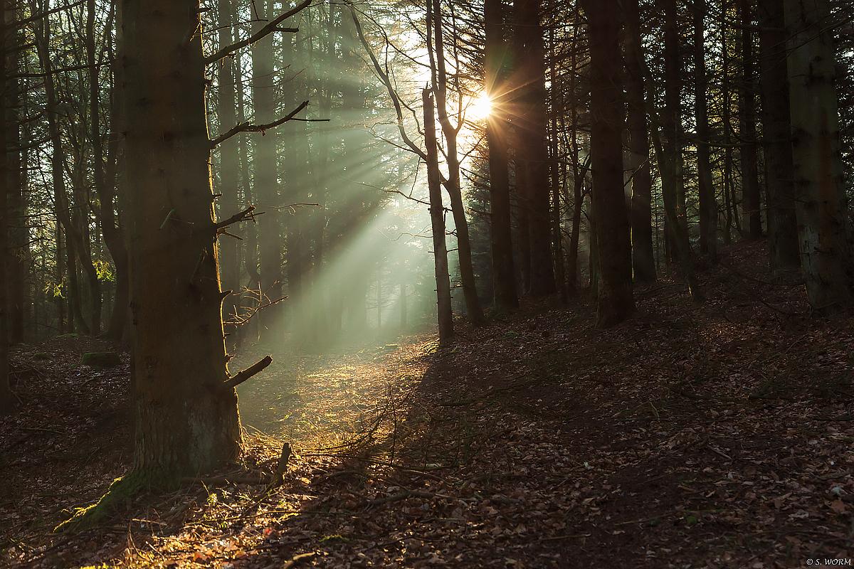 No.71 Solstråler i Tved Klitplantage
